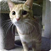 Adopt A Pet :: Brother - Lombard, IL