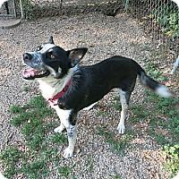 Adopt A Pet :: Shasta - Geneseo, IL