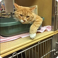Adopt A Pet :: Rupert - West Dundee, IL