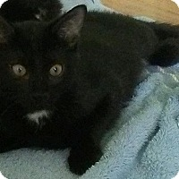 Adopt A Pet :: Wrigley - Seminole, FL