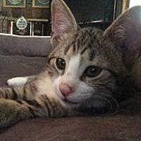 Adopt A Pet :: Miles - Transfer, PA