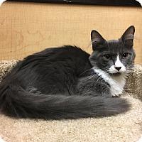 Adopt A Pet :: Blaze - Riverside, CA