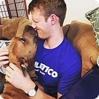Adopt A Pet :: Odin-courtesy post - Schaumburg, IL