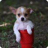 Adopt A Pet :: Tee - South Dennis, MA