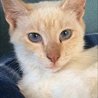 Adopt A Pet :: GINGER - Corona, CA