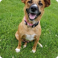 Adopt A Pet :: Maggie - Hornell, NY