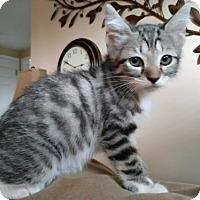 Adopt A Pet :: Willow - Land O Lakes, FL