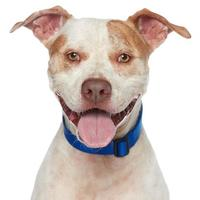 Adopt A Pet :: Will - Los Angeles, CA