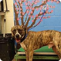 Adopt A Pet :: FLOYD - Waco, TX