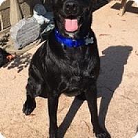 Adopt A Pet :: Chango - Torrance, CA