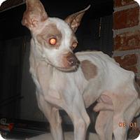 Adopt A Pet :: arli - haslet, TX