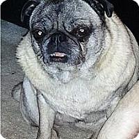 Adopt A Pet :: Dorree - Avondale, PA