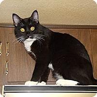 Adopt A Pet :: Zee - Scottsdale, AZ