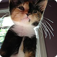 Adopt A Pet :: KiKi - Monroe, GA