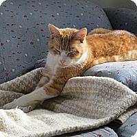 Adopt A Pet :: Reilly - Portland, ME