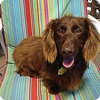 Adopt A Pet :: Talia - San Jose, CA