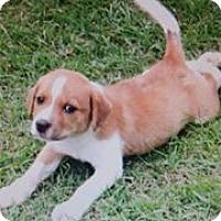 Adopt A Pet :: Justice - Cottonport, LA