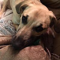 Adopt A Pet :: Anna fka Jessica Jones - Jacksonville, FL