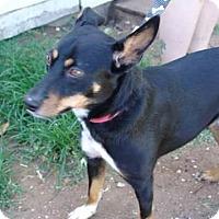 Adopt A Pet :: Chad - Joshua, TX