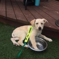 Adopt A Pet :: Jessie - San Antonio, TX