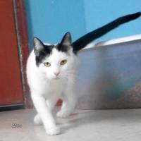 Adopt A Pet :: Moo - Oskaloosa, IA
