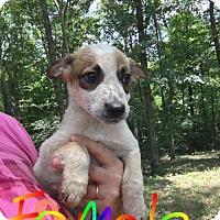 Adopt A Pet :: Eila (NY-Renee)- ADOPTED - Sherburne, NY