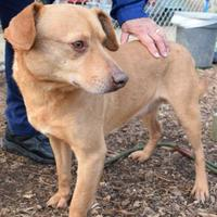 Adopt A Pet :: Ceasar - Anniston, AL