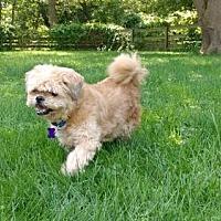 Adopt A Pet :: Bear - Beloit, WI
