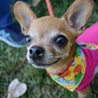 Adopt A Pet :: Vanja - Ann Arbor, MI