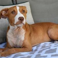 Adopt A Pet :: Costa - - Ridgeland, SC