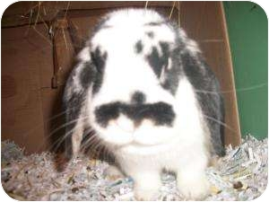 Lop, French for adoption in North Pole, Alaska - Flopsy