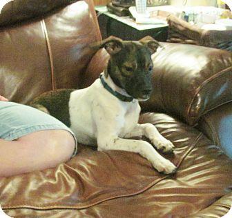 Terrier (Unknown Type, Small) Mix Dog for adoption in Cairo, Georgia - Milkshake