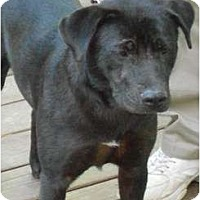 Adopt A Pet :: Alyse - Raleigh, NC