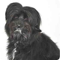 Adopt A Pet :: Chip - Port Washington, NY
