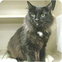 Adopt A Pet :: Abbey - Mesa, AZ