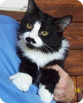 Domestic Mediumhair Kitten for adoption in Minneapolis, Minnesota - Whitney and Houston