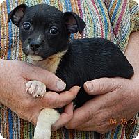 Adopt A Pet :: Gere (3 lb) - SUSSEX, NJ