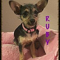 Adopt A Pet :: Ruby - Tempe, AZ