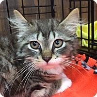 Adopt A Pet :: Gia (MP) - Little Falls, NJ
