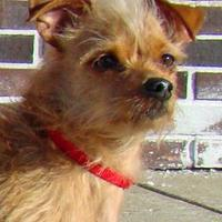 Adopt A Pet :: Maggie - Greenfield, IN