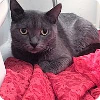 Adopt A Pet :: Magda - Vancouver, BC