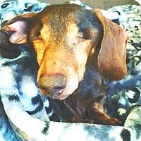 Adopt A Pet :: Cinder - Andalusia, PA