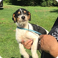 Adopt A Pet :: Marie - Allentown, PA
