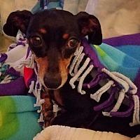 Adopt A Pet :: Zuki - Livonia, MI