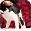 Photo 1 - Domestic Shorthair Cat for adoption in Houston, Texas - Cody
