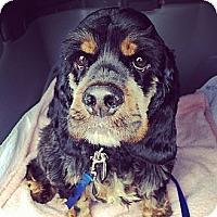 Adopt A Pet :: Otis - Ottawa, ON