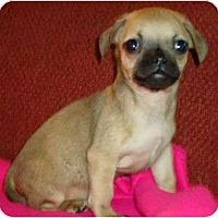 Adopt A Pet :: Haden - Plainfield, CT
