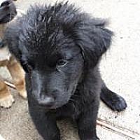 Adopt A Pet :: Kari - New Boston, NH