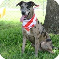 Catahoula Leopard Dog Mix Dog for adoption in San Leon, Texas - Celeste