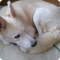 Adopt A Pet :: Laszlo - Spring City, TN